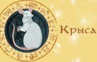 Гороскоп для Крысы на 2019 год: женщина и мужчина
