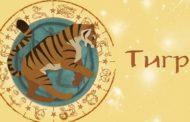 Восточный гороскоп для Тигра на 2019 год