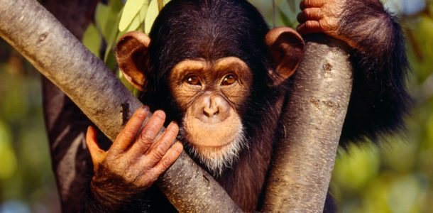 китайский гороскоп на 2019 год обезьяна