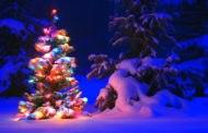Отдых в Карпатах на Новый год 2019 и Рождество
