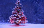 Недорогой отдых на Новый год 2019 в Подмосковье