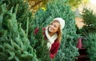 Как правильно выбрать хорошую елку к Новому году 2019