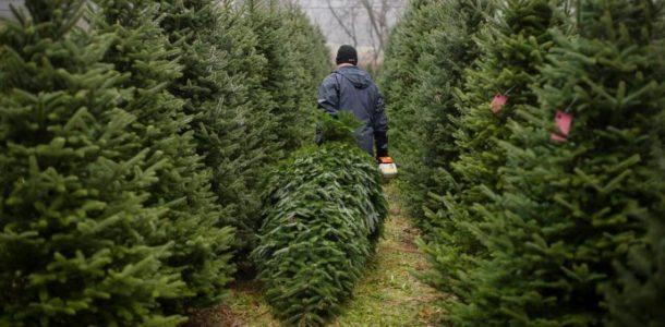 какие бывают искусственные елки