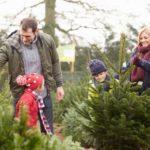как выбрать живую елку на новый год 2019