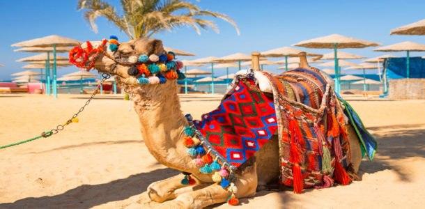 тур в египет на новый год 2019