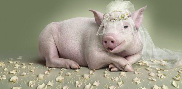 свадьба в 2019 году приметы