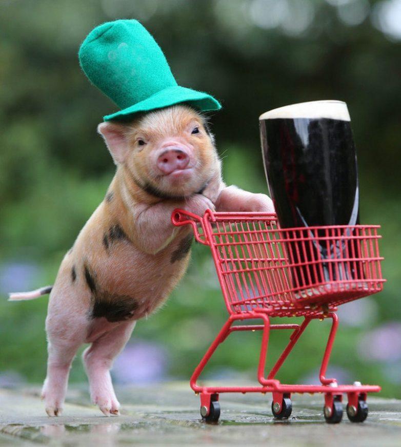 Картинки с прикольными свиньями отличие других