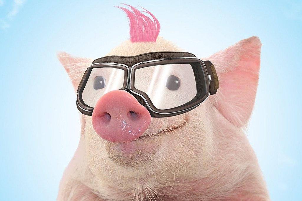 картинки с прикольными свиньями пыталась найти